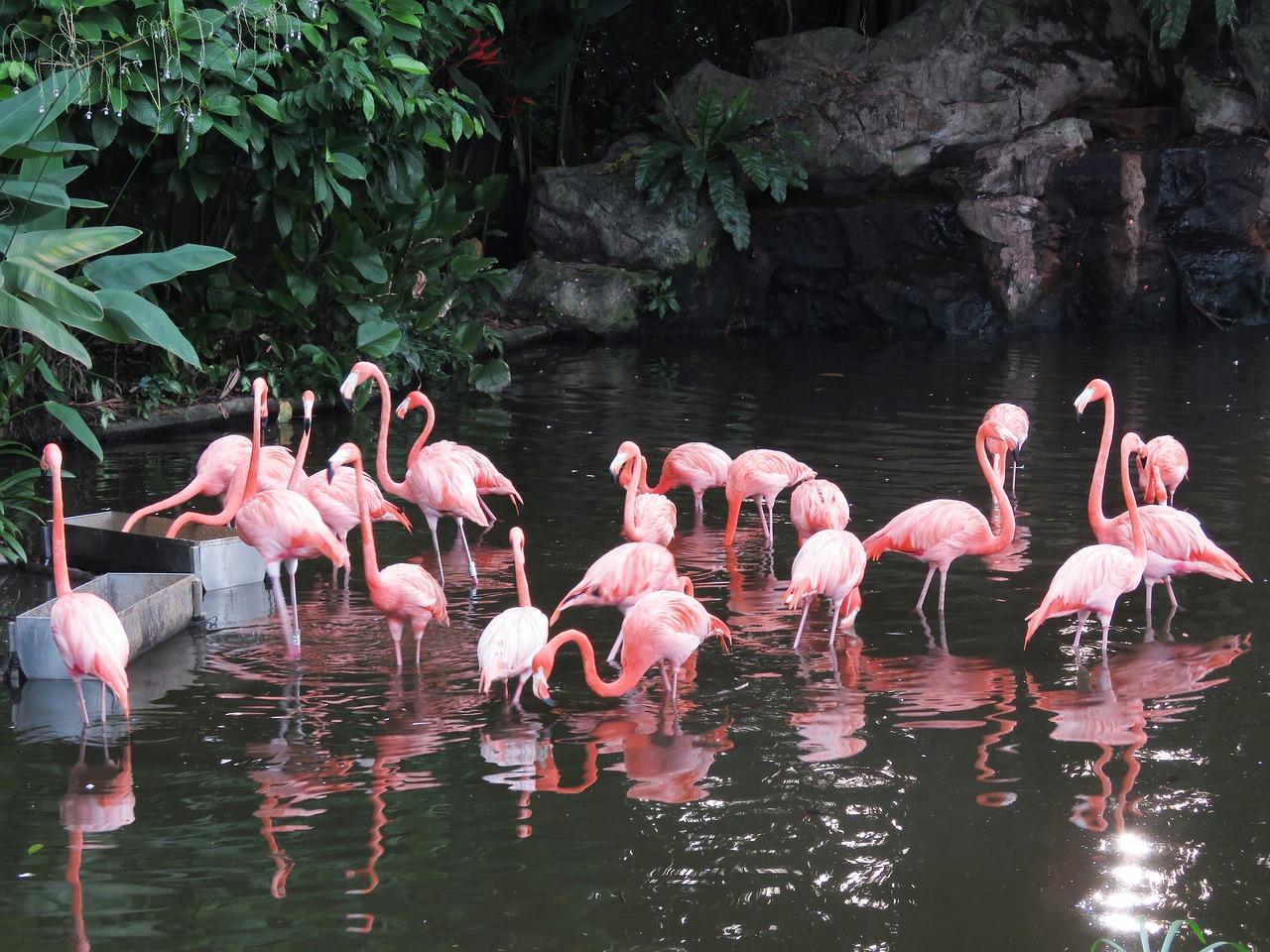 flamingo-water-birds-exotic-birds-2460461
