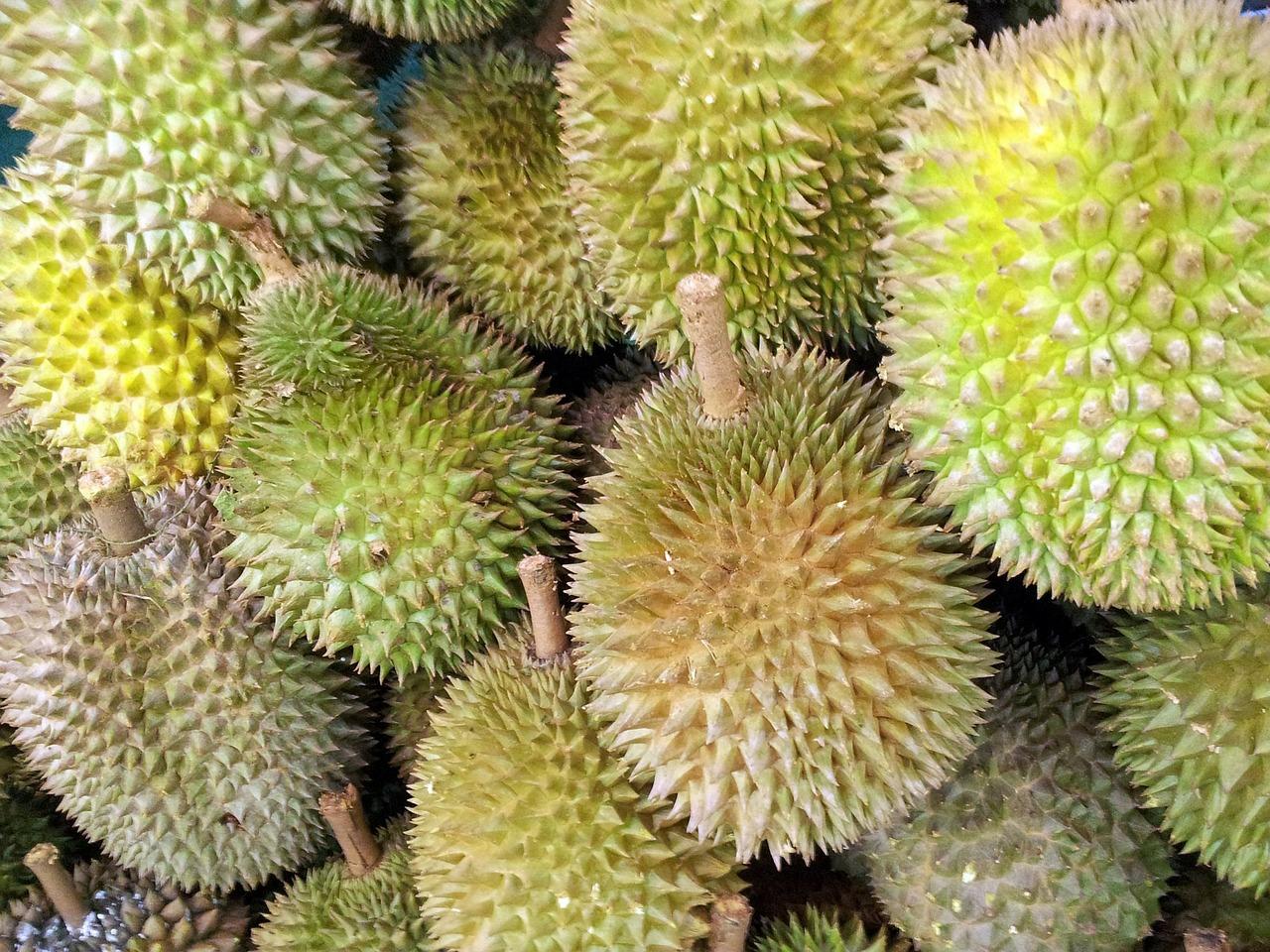 singapore-durian-fruit-314915